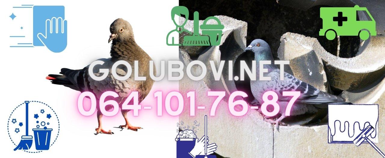 Zaštita od nastanjivanja golubova u zgradama i stanovima u Beogradu Novom Sadu Vojvodini i Srbiji,čišćenje zgrada tavana i terasa od golubova,i sanitarne usluge sa golubovima,konsultacija u humanom odbijanju golubova.15+ godina radnog iskustva od strane sertifikovanih sanitarnin inženjera,biologa i ddd tehnologa.